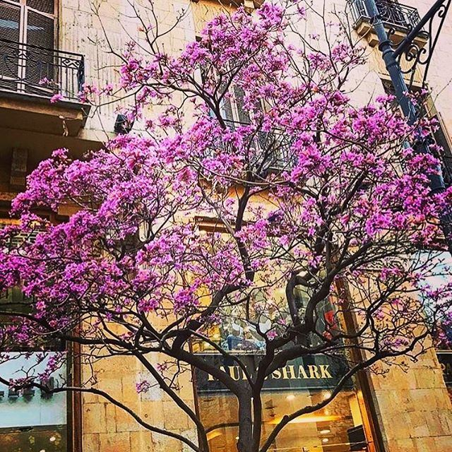 Spring in downtown Beirut 🌸  livelovebeirut  repost from @amra_lb ...... (Downtown Beirut)