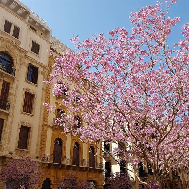 Can't get enough of the  Beirut spring travel  lebanon  beyrouth  liban ...