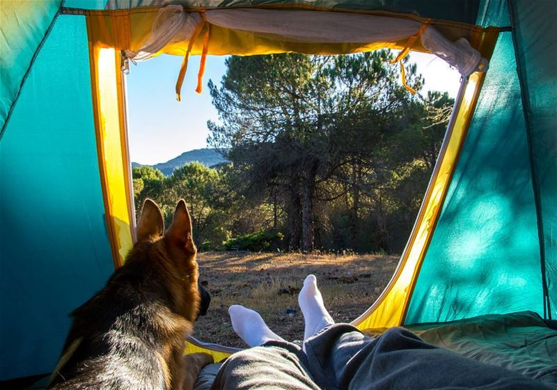 Morning view with Logan 🐶⛺..... morning view dogs dog bestfriend... (Baskinta, Lebanon)