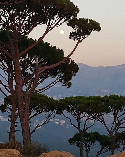 end  of  a  day  luna  moon  moonlight  pine  trees  woods  forest ... (Deïr El Harf, Mont-Liban, Lebanon)