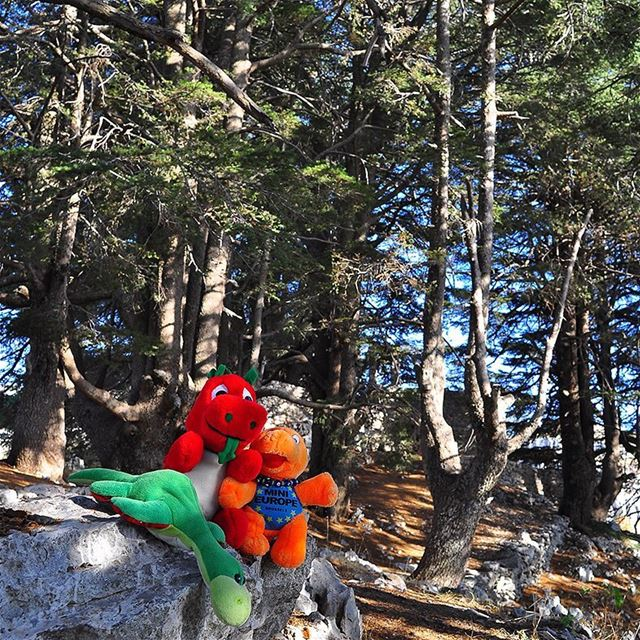 Ness, Griff & Mini-e kick started the Hiking year 2017-18 exploring Arz... (Arz Jaj)