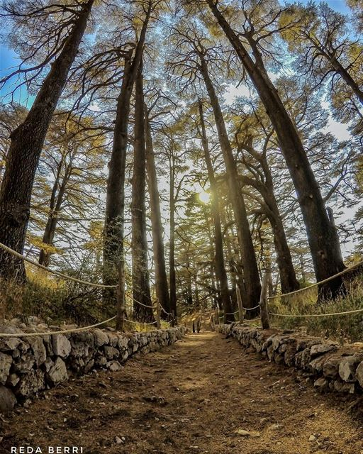 Only one who wanders finds new paths lebanon_pictures  lebanontimes ... (Lebanon)