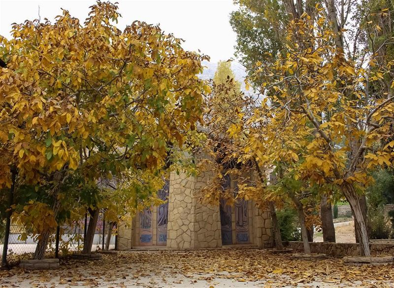 Golden colours of  autumn  fall  church  churchlovers  mountain  walnut ... (Lebanon)