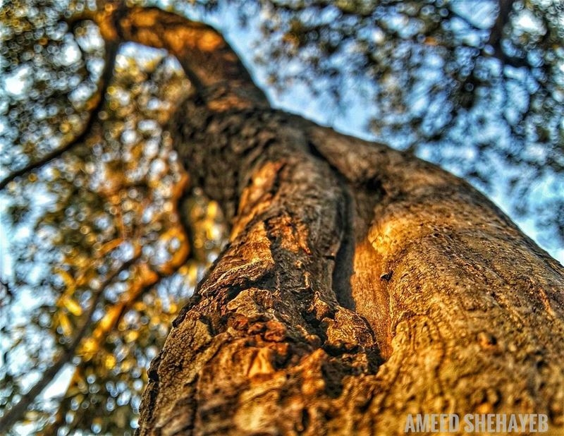 🍁🍂  fall  autumn  tree  photography  aleydistrict  aley  lebanon_hdr ...