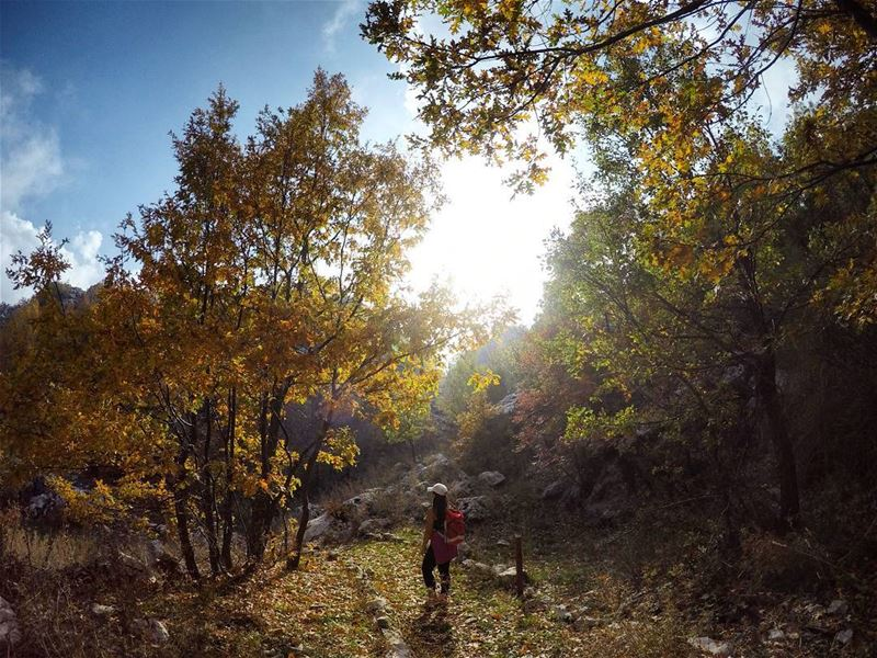 hiking  hikingday  hikinggirl  colorfultrees  livelovelebanon ...