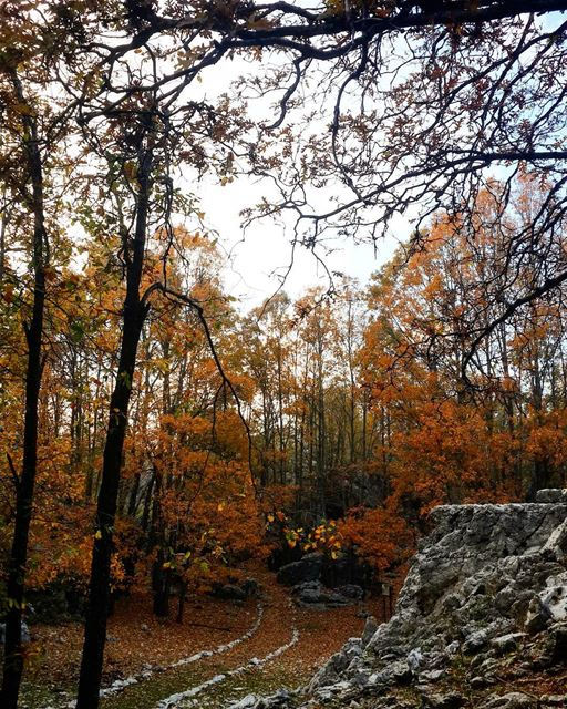 nature is our  treasure 😍😍  falltime  hiking  sundayworkout  falltime🍁...