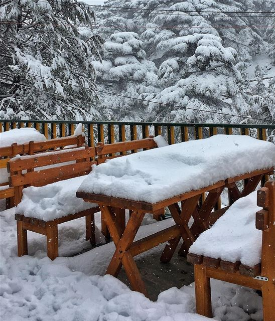 It isn't just a dream...  snow  lebanon ... (Cedars of God)