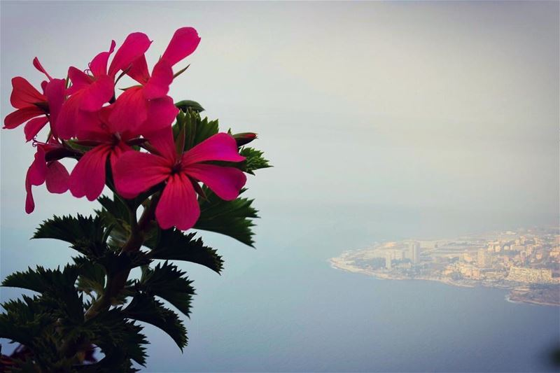 Rise Up, Rise High, Rise above All... GoodMorning  morning  flower  see ... (لبنان)