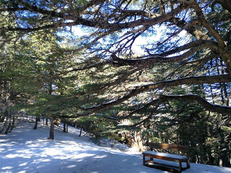 Never say there is nothing beautiful in the world anymore. ... (Al Shouf Cedar Nature Reserve)