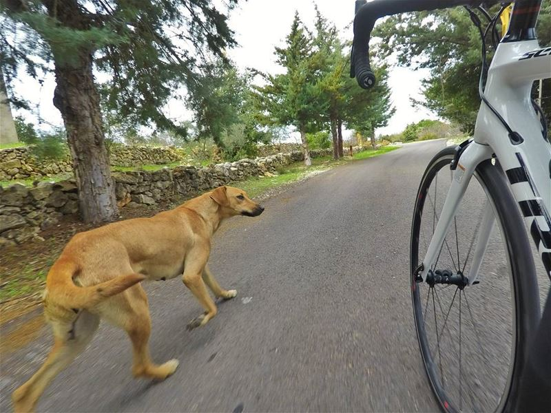 The best therapy is a time out on your bike with a good company 🚴🐕...... (Chouf)