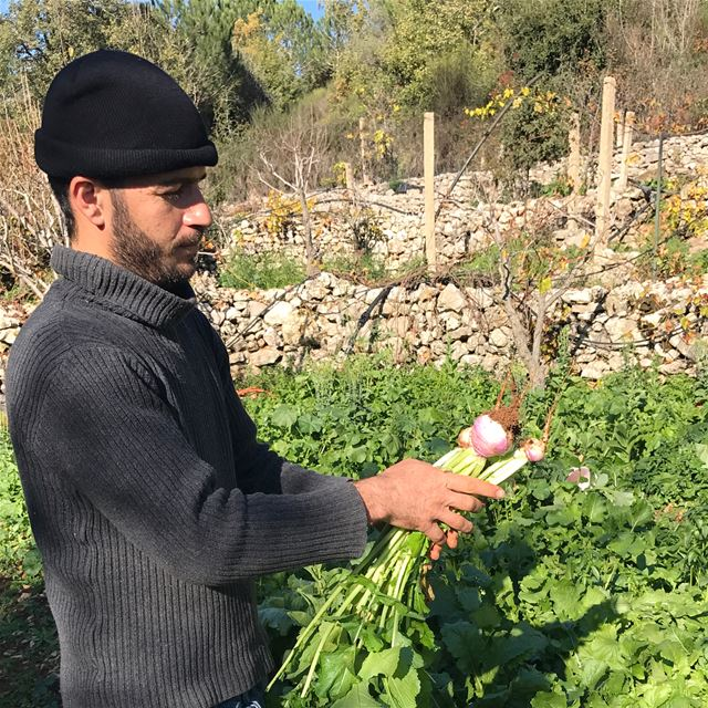 """I studied history in  Lebanon at the Lebanese University, and Agriculture..."