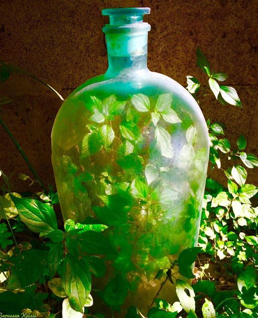 bottle  green  plantinabottle  mygarden ...