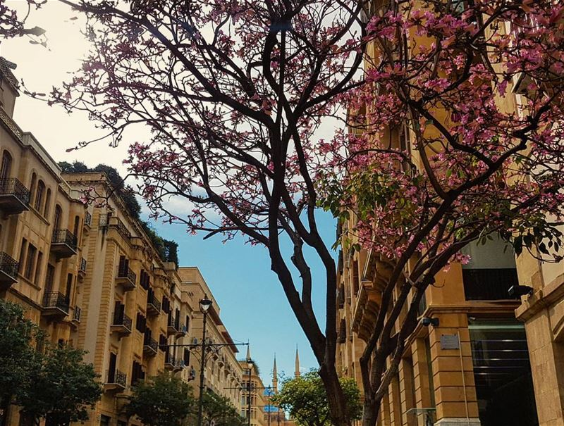 Springish cold winter in Beirut..❄🌸🌦🌸❄..📍Downtown - Beirut ... (Downtown Beirut)