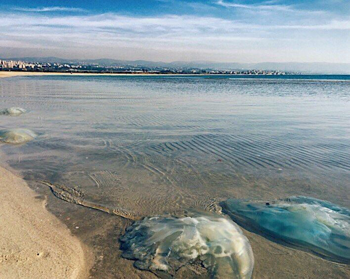 tyre  jellyfish  sky  landscape  amazing  view  beach  life  sea  clouds ... (Tyre-Sour At Beach)