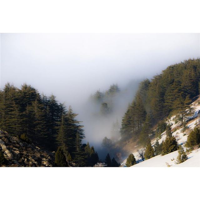ehden  ehdenreserve  snow  trees  clouds  fog  beautifullebanon ...