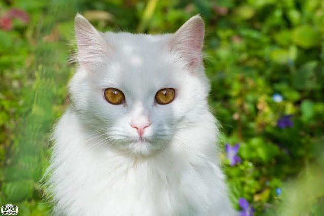 Good morning 🐱✋ pet  pets  animal  animals  cat  cats  whitecat  garden ...