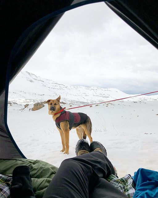 Home views ⛺️🐕 ollytheking  snowcamp  morningview  livelovebeirut ... (Cedars of God)
