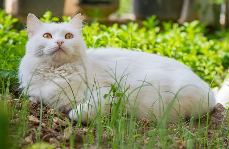 Morning Photoshoot with my cat 🐈 morning  nature  garden  animal  cat ...