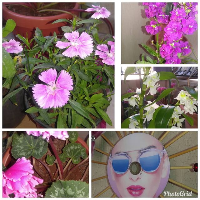 Good morning from my  littlegarden  flowers  pink  colors  spring ...