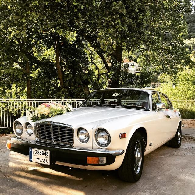 jaguar car vintage old lebanon trees green mountain dlebta wedding white... (Dlebta, Mont-Liban, Lebanon)