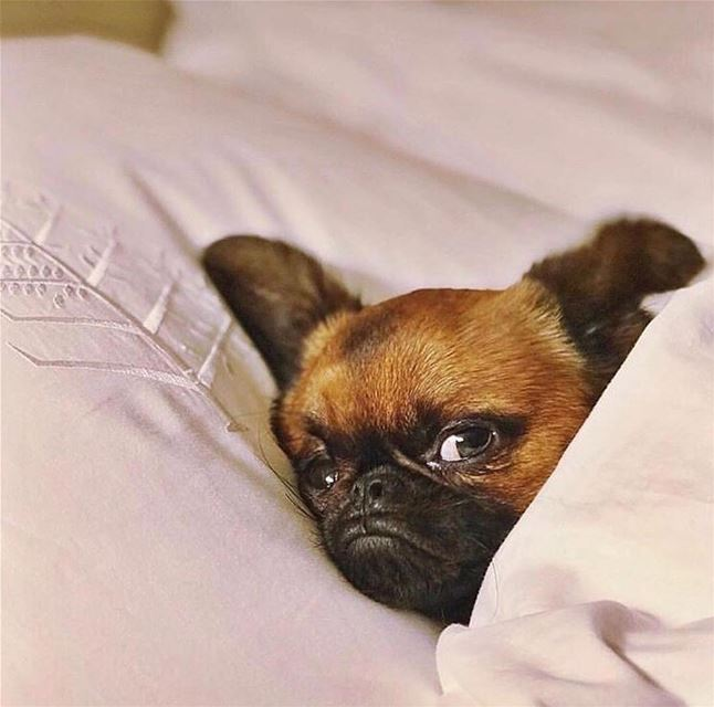 Turn that frown upside down! Our Hotel is pet friendly, so you can stay in... (Four Seasons Hotel Beirut)