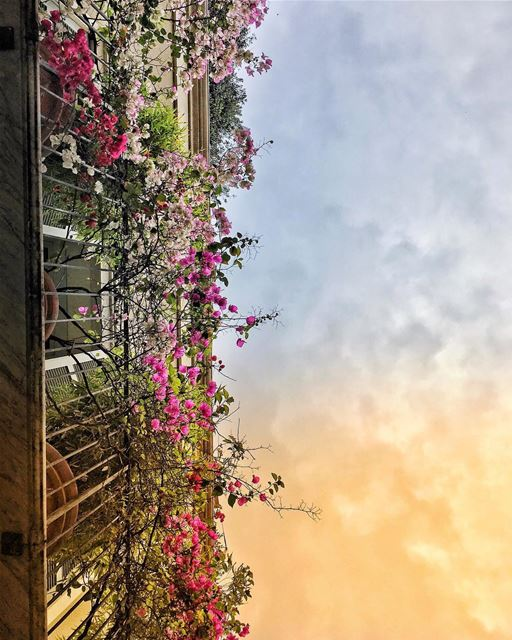 Dispersed petals over lonely balconies, broken souls hum a melody,... (Gemmayzeh Gouraud Street)