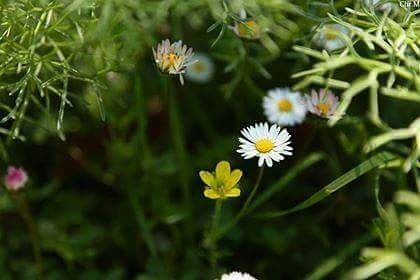 Earth laughs in flowers!  jabalmoussa  unescomab  unesco ...