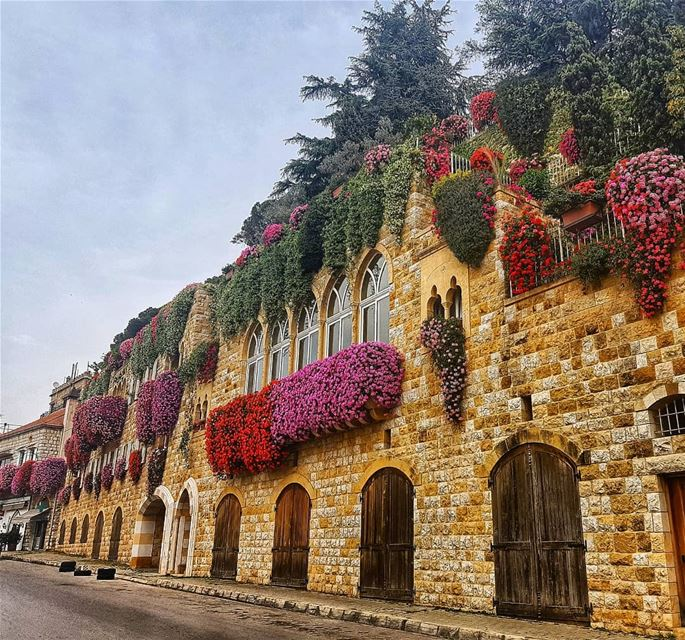 flowers  flower  petal  petals  nature  beautiful  love  pretty  plants ... (Broummâna, Mont-Liban, Lebanon)