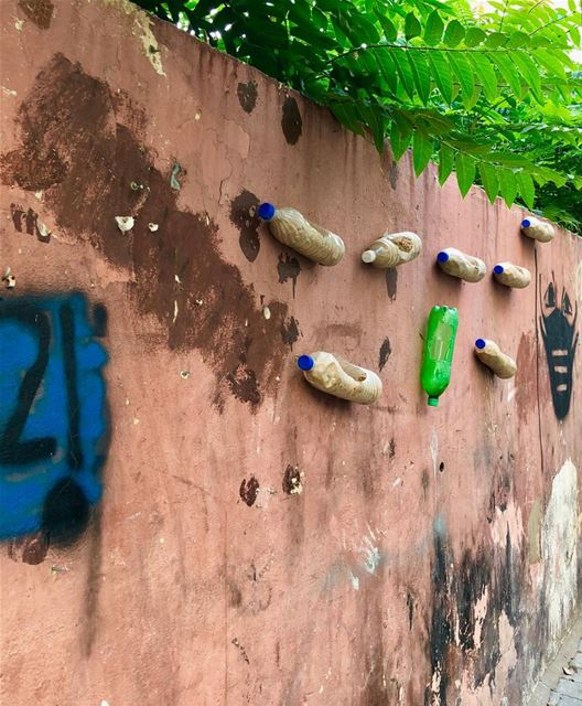 Three-dimensional wall art. Or cute mice housing? Bird feeders?  beirut ...