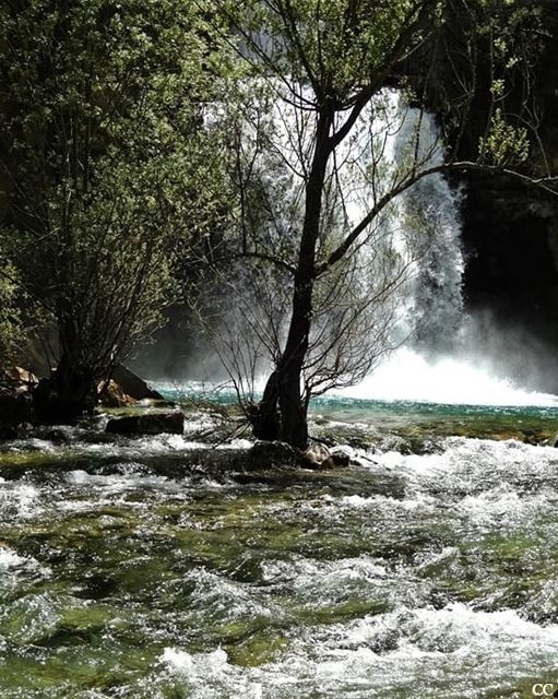 lebanon  waterfall  water  afqa  livelovelebanon  livelovebeirut ...