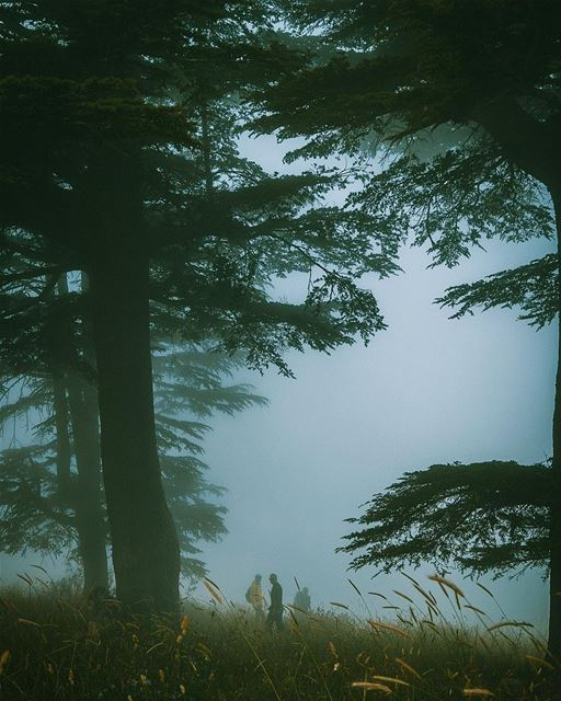 Dark Woods🌲...... theglobewanderer  green  cedar  mist  red  yellow ... (Horsh Ehden)