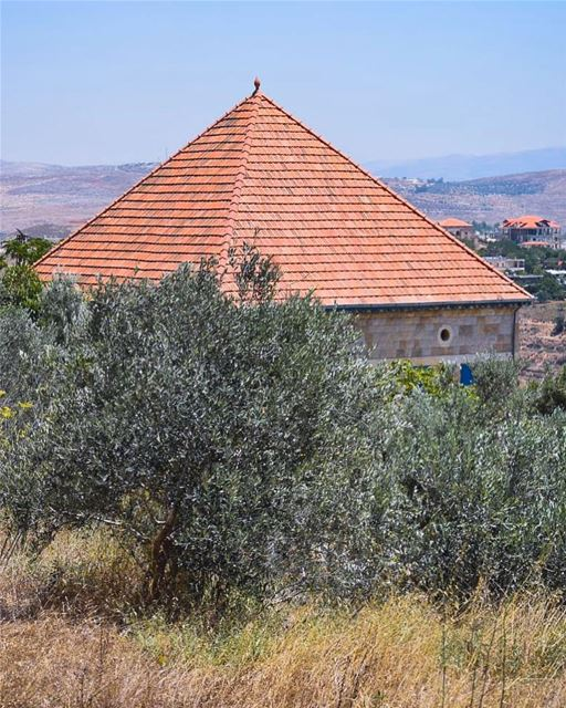Golden seeds, green olives & red tiles 🌿🏠🌾 these are the authentic ... (Marjayoûn, Al Janub, Lebanon)