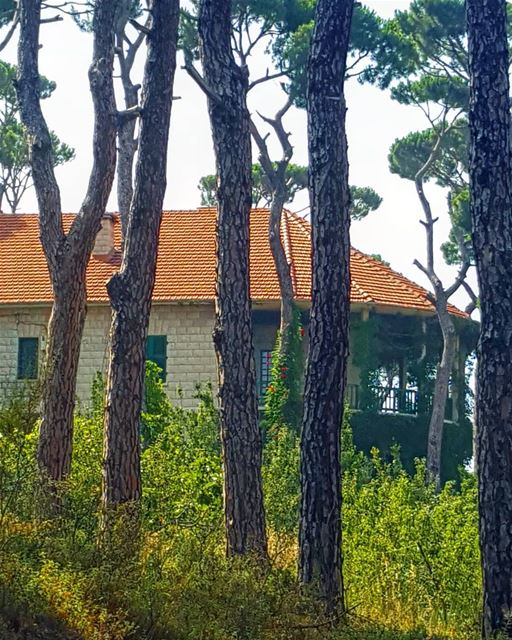 Hiding in the woods 🏡💚❤ ........... Lebanon  MountLebanon ... (Bois De-Boulogne, Mont-Liban, Lebanon)