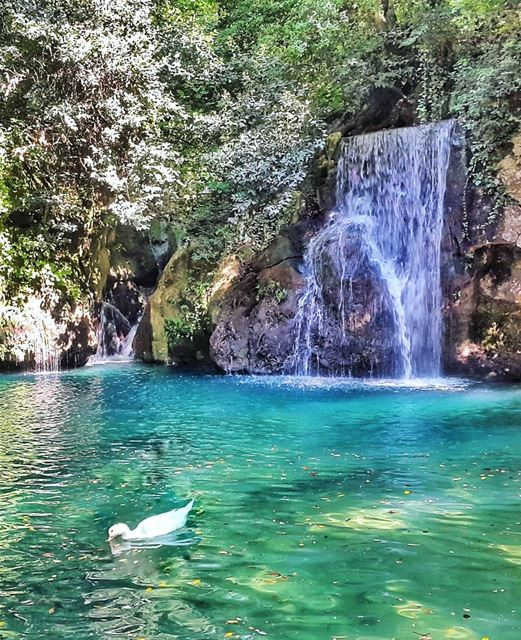 Sometimes a stay-cation can be just as fun as a vacation! Especially when... (Baakline, Mont-Liban, Lebanon)