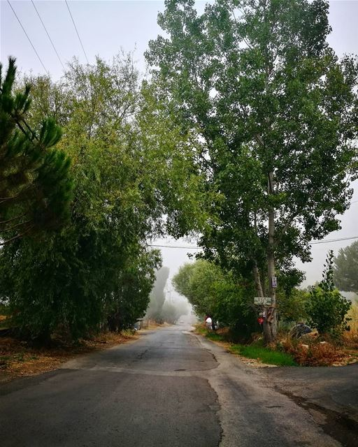 road trips 💜 roadtrip  Lebanon  liban  mountains  trees  frommycar ... (Lassa, Lebanon)