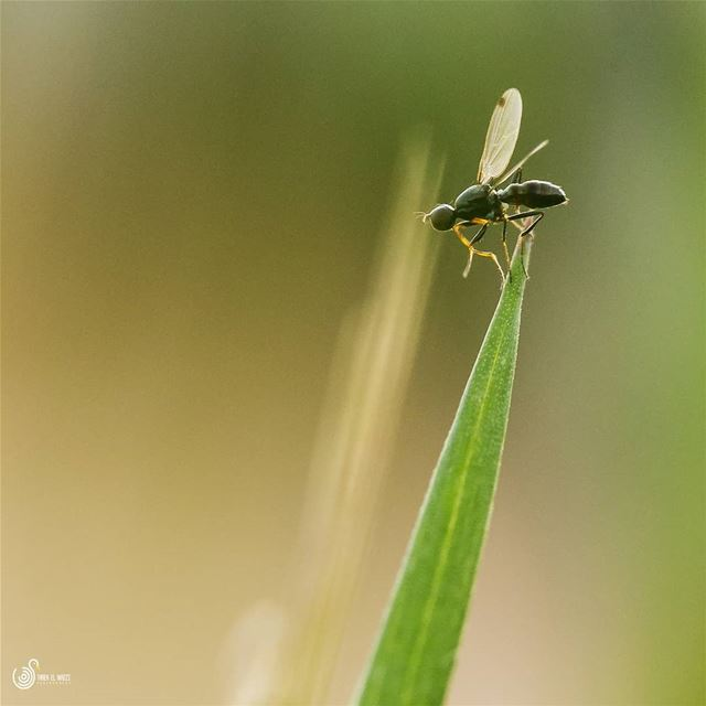 Ready for take off!!!  macro  littlefly  fly  nature  sigma105  lebanon ...
