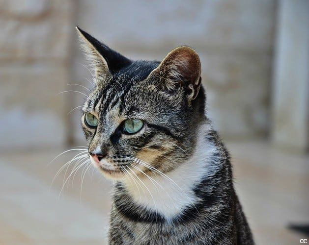 cat  pet  animallovers  animals  picoftheday  livelovelebanon ...