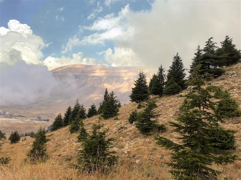 Pricless  hike in the new cedar's natural reserve...••• hike  nature ... (Bcharreh, Liban-Nord, Lebanon)