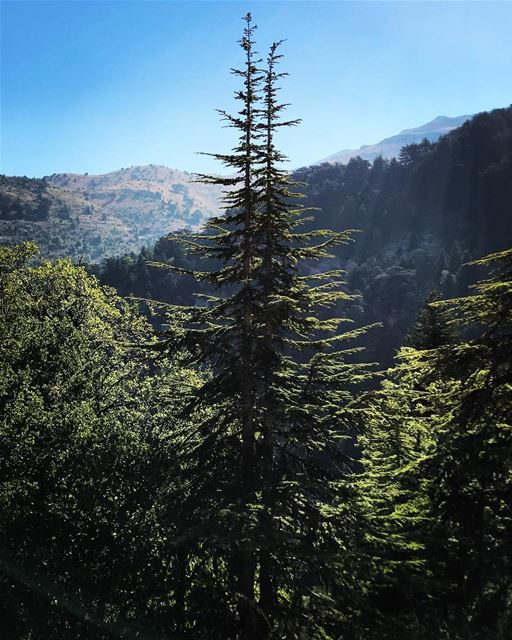 ehden horshehden lebanon north nature trees mountains sky freshair hiking... (Horsh Ehden)