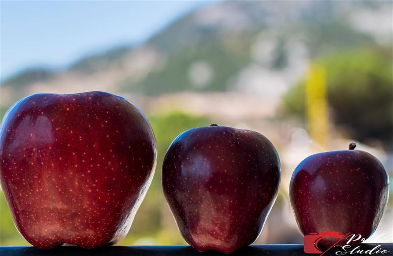 Pick the one you eat  apple  applepicking  fruits  food  foodporn ... (Qartaba)