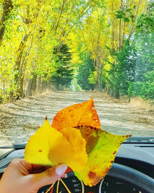 Autumn is coming... And this is the perfect kind of bouquet, wouldn't you... (Lebanon)