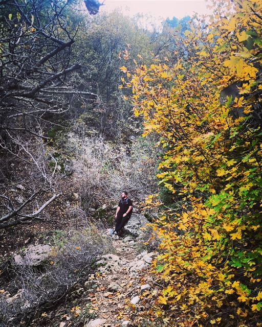 Hello  autumn   yellowleaves  hiking  hikingadventures  hikingtime ...