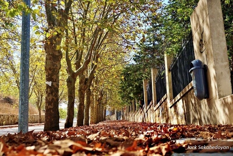 Autumn leaves  autumn  leaves  autumnleaves  sofar  autumninsofar  trees ...