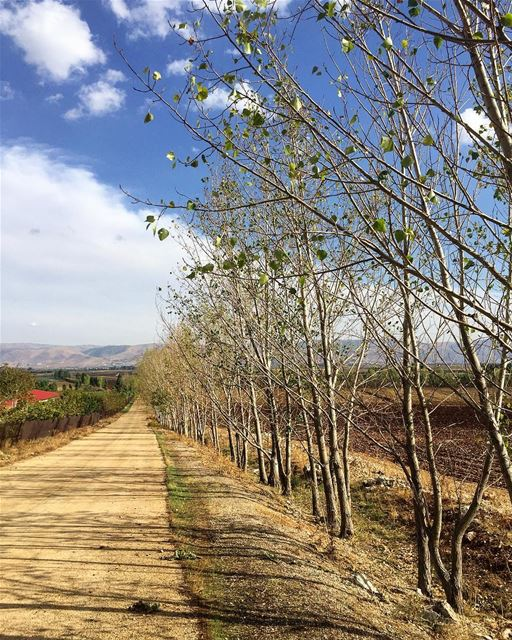 Notice how the trees do not cling to their leaves? Fall is about... (West Bekaa)