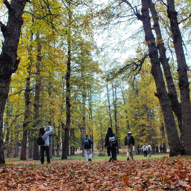 Hike with ProMax in Qammoua Forest this Sunday, November 25. Booking +96139 (El Qammoûaa)