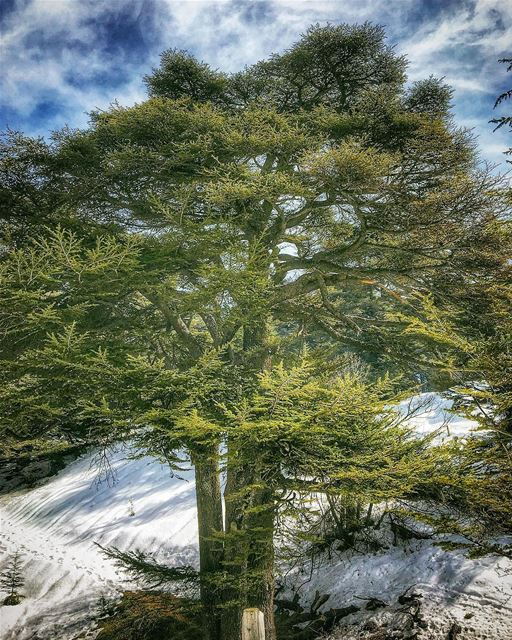 بتضلك سيفي مهما صاروبحبك بحبك مهما صارمن تلجك انا، من بحرك اناانا جايي م (Cedars of God)