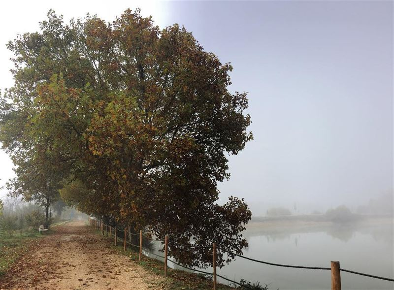morningwalk  sundayfunday  foggy  autumn  fall   earlybird  weekendvibes ... (Deïr Taanâyel, Béqaa, Lebanon)