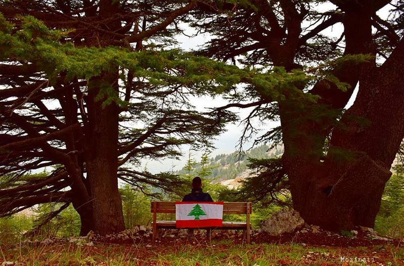 Happy independence day ❤================================== ... (Arz el Bâroûk)