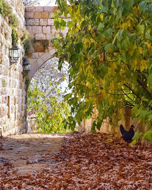 The leaf of every tree brings a message from the unseen world. Look, every... (Ehden, Lebanon)