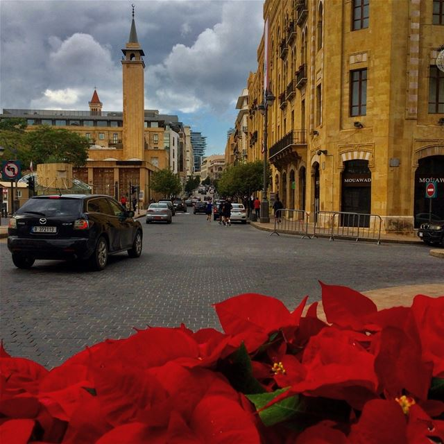 My favorite color in December is Christmas Flowers.❤️ streetphotography ... (Downtown Beirut)